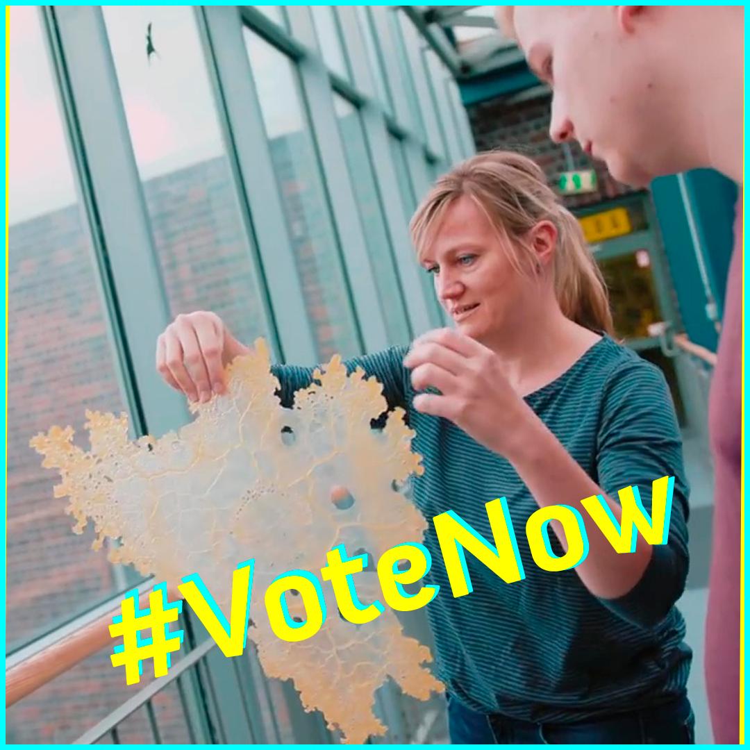 #VoteNow – Ist dieser Schleimpilz ohne Gehirn intelligent?